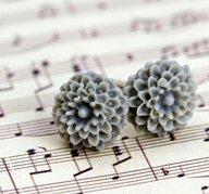 Krysantemum - grå